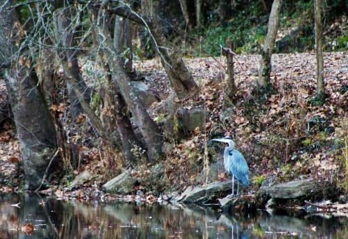 Blue Herring - blog