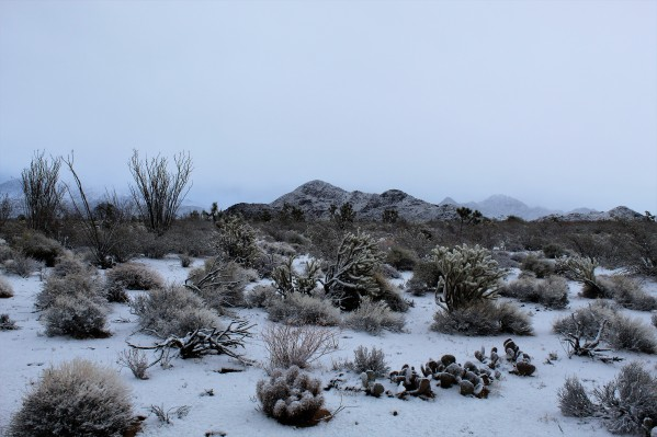 A desert snow (2)