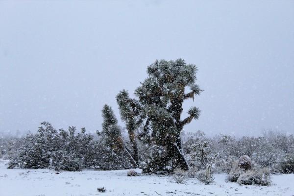 A desert snowstorm (2)