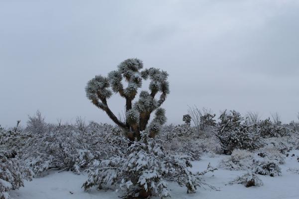 A desert snowstorm (7)
