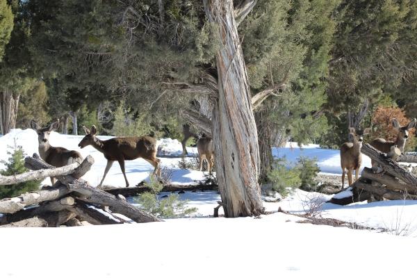 Deer - Colorado