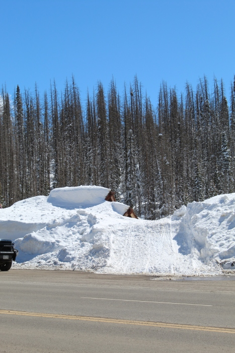 Wolf Creek Pass sign - snowmobile ramp - March 16, 2019